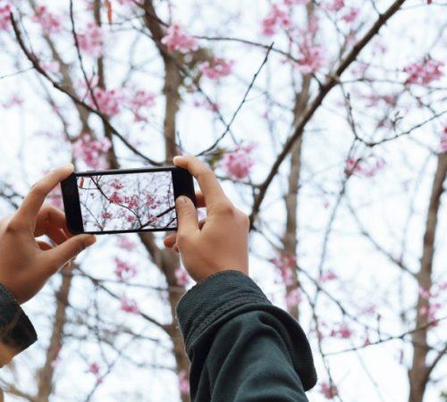 Cinco cosas que debes tener en cuenta al usar el zoom de tu smartphone