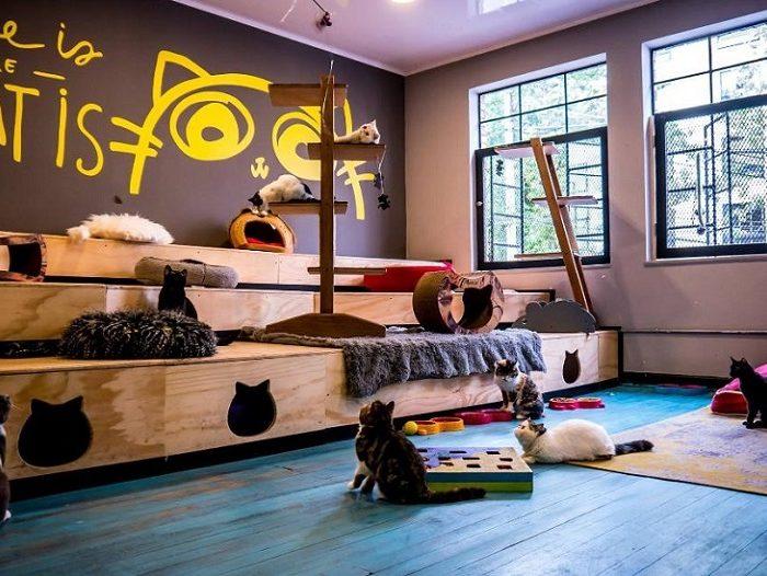 Conoce el lugar en Bogotá en el que puedes hacer yoga con gatos